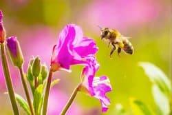 Les pollinisateurs : des partenaires indispensables