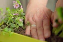 Bientôt l'été ! Profitez-en pour fleurir votre fenêtre ou votre balcon !