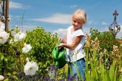 Sous la canicule… quelques conseils pour votre jardin