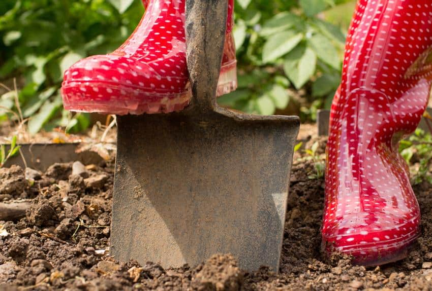 B chage et ver de terre for Ver gris potager