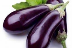 Réussir les semis d'aubergine