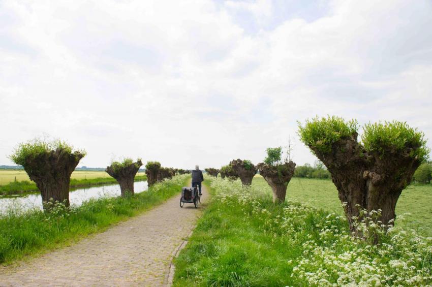 Les arbres têtards, arbres paysans aux mille usages