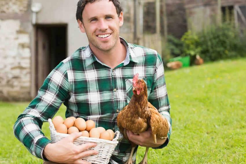 Réduire ses déchets ménagers grâce aux poules, ça marche!
