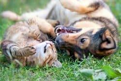 Quelques conseils bien utiles pour vos chiens et chats quand ils arrivent dans votre jardin