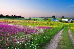 Fleurir son jardin à la dernière minute