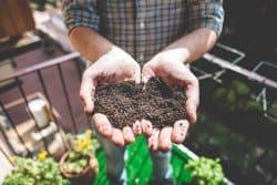 Un sol fertile et vivant