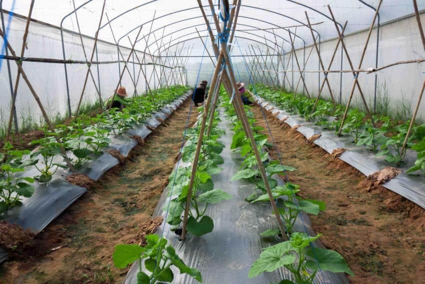 Le Walipini, une serre souterraine et… des légumes frais toute l\'année !