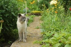 Les plantes bénéfiques pour nos amis poilus