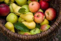 Tout savoir sur la tavelure des pommes et des poires