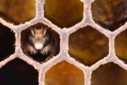 Le miel et les autres trésors de la ruche