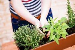 Que dire des pots et autres jardinières ?