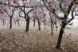 Le verger au fil des saisons