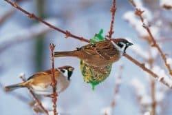 Les oiseaux qui passent leur journée dehors souffrent-ils, trouvent-ils suffisamment à manger?