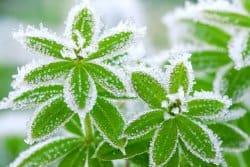 Protégez vos plantes les plus frileuses !