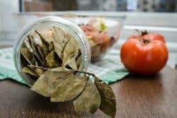 Comment cultiver le laurier-sauce?
