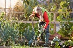 Hivernage des légumes
