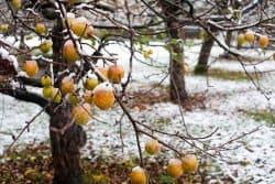 Les arbres fruitiers et les sols qu'ils préfèrent