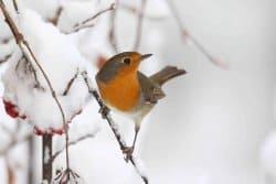 Aménager son jardin pour y accueillir les oiseaux