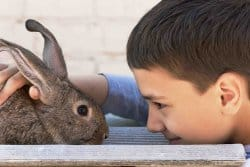 Le lapin, un animal de compagnie apprécié!