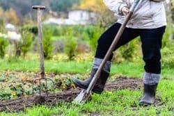 Dernière ligne droite pour les plantations à racines nues!