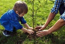 Que planter sous un arbre?