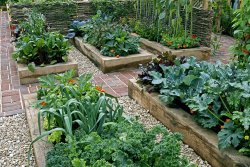 Petits légumes pour potagers de poche!