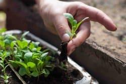 Multiplier les plantes : un jeu d'enfants !