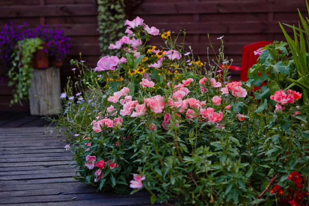 fleurir son jardin la derni re minute. Black Bedroom Furniture Sets. Home Design Ideas