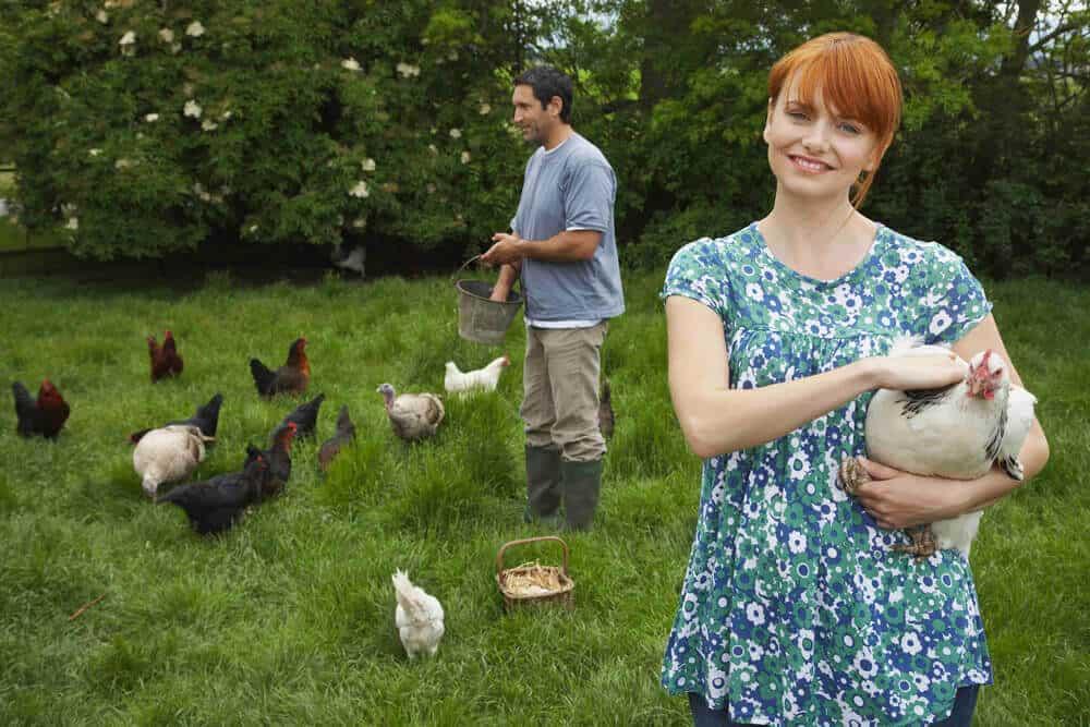 Des poules dans son jardin: en voilà une bonne idée!