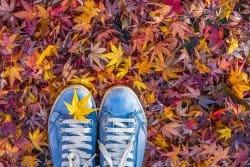 Des feuilles, des feuilles et encore des feuilles!