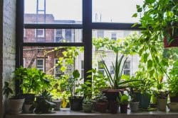 Planter : trucs et astuces