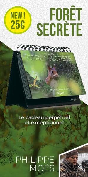 « Calendrier perpétuel : Forêt secrète » de Philippe Moës est disponible en librairies et sur notre e-shop.