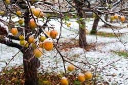Les arbres fruitiers et les sols