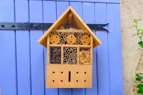 Invitez les insectes dans votre jardin