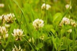Tous les engrais verts sont-ils valables?
