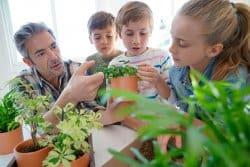 Comment sauver vos plantes en pot