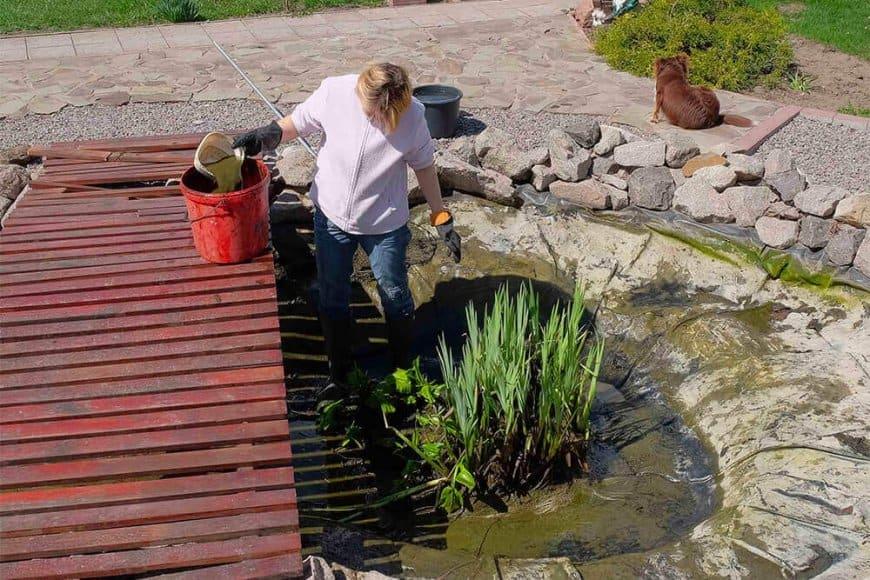 Les plantes aquatique : comment planter et entretenir