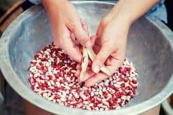 Comment récolter et conserver des semences?