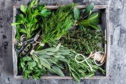 Des plantes aromatiques pour des saveurs asia-tiques