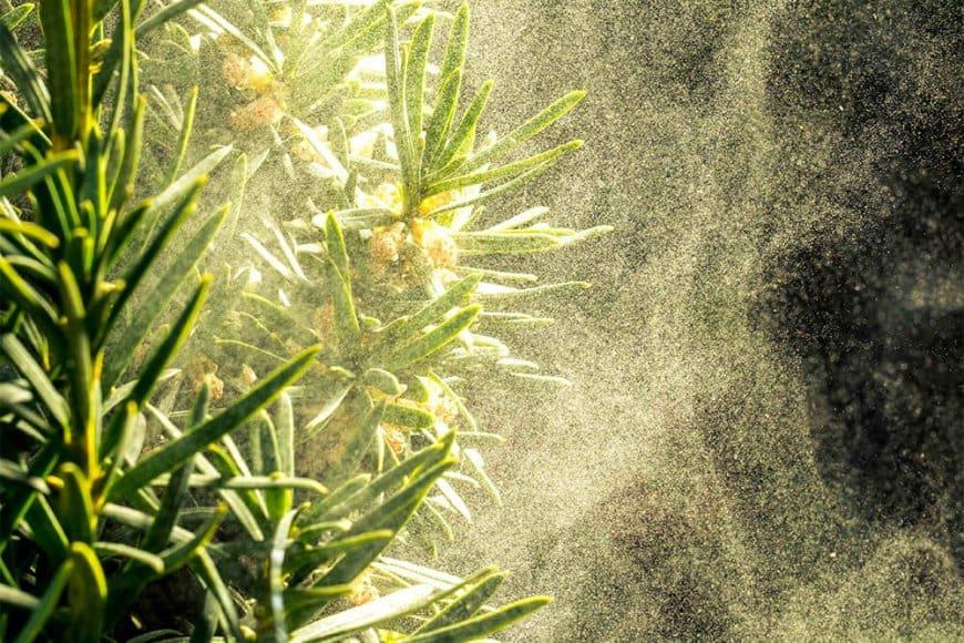 Les plantes et leurs strategies de defense