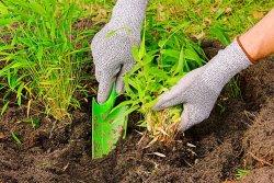 Bambous: petit mode d'emploi pour bien les planter