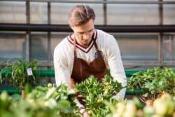 Nos conseils pour bien choisir ses plantes et bien acheter