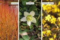 Plantes ornementales: mon Top 3 pour l'hiver