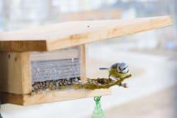 Réalisez une mangeoire à oiseaux en 9 étapes