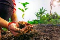 Qu'est-ce qu'un sol en bonne santé?