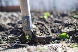 Février, le meilleur mois pour planter !