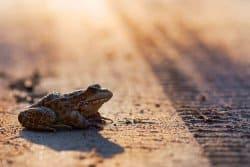 Amphibiens, la grande traversée