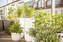 Créer son jardin en pots