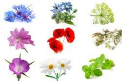 On sème ensemble : quelles fleurs ?