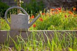 On sème ensemble : entretenir ma prairie fleurie